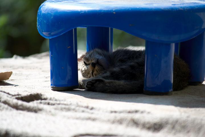 Kitten resting